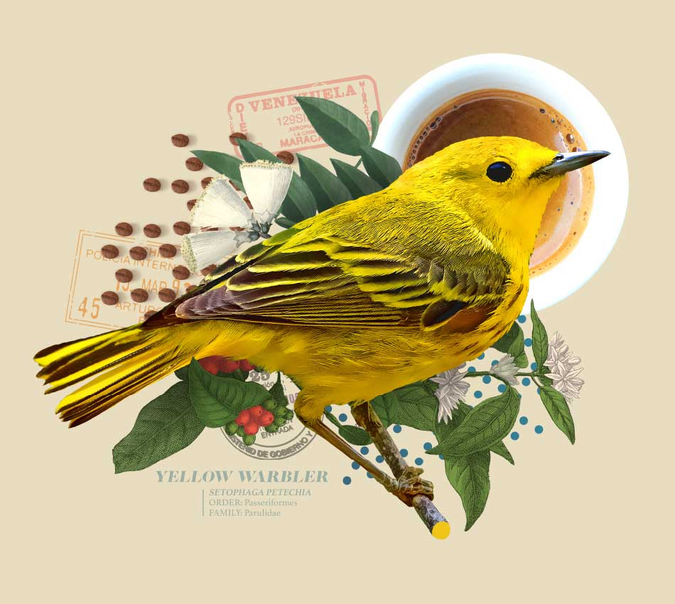 Smithsonian Bird Friendly Coffee - Brand Assets - Creative - Campaign Strategy